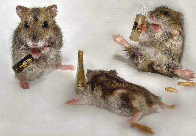 Wasted Mice