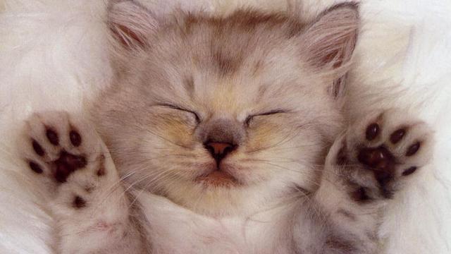 Cute Kitten Sleeping