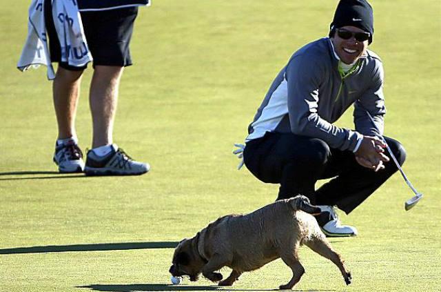 Michael Phelps, Paul Casey, golf, dog