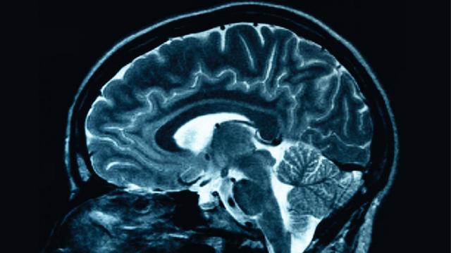 mayim bialik divorce neuroscience
