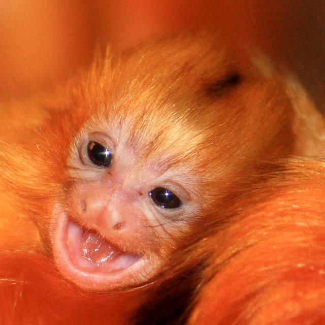 EMPRABA plans to clone wild animals