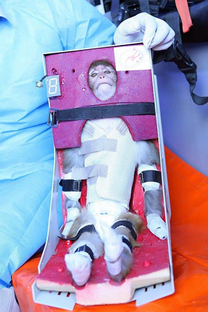 iran monkey in space