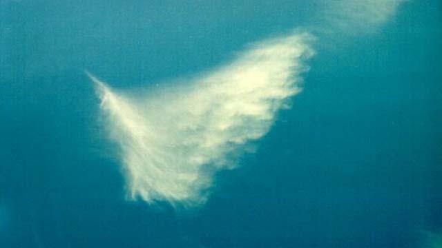 Fox Five, Andrea Tantaros, Sandy Hook Elementary, Newtown Massacre, Angel in Clouds, Sandy Hook Angels