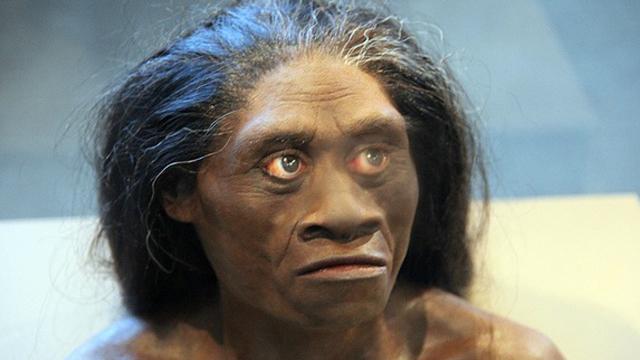 Female Hobbit Human