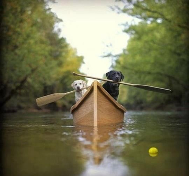 Canoeing dogs