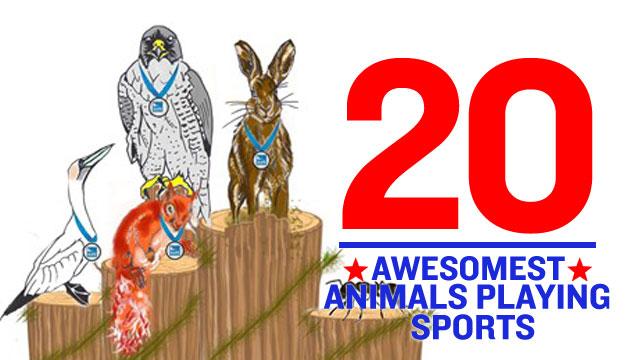 animal-athletes