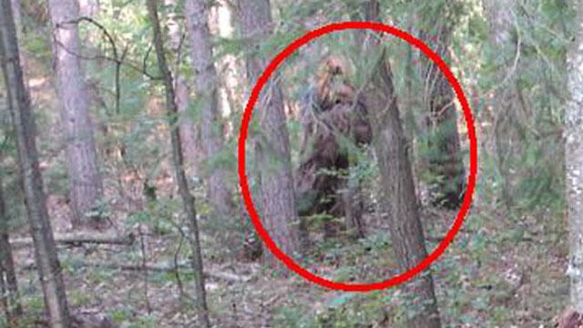 Bigfoot Exists, Sasquatch Exists Denovo Laboratories.