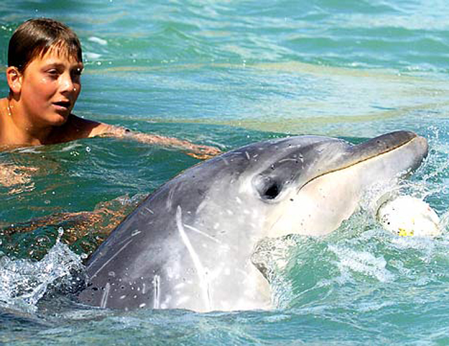 Dolphin saves beached whales