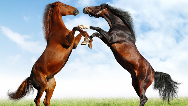 Findus Horse Meat