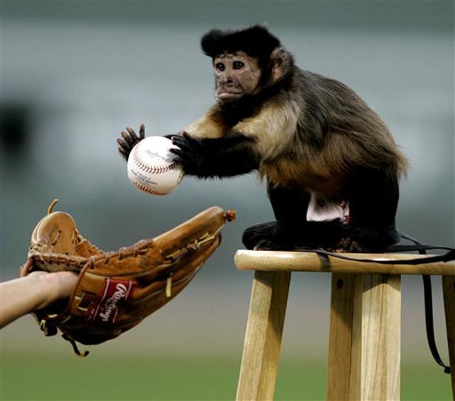 Monkey playing baseball