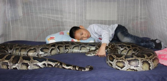 python and boy sleep together