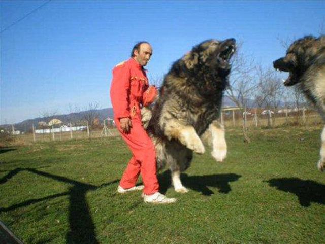 bear killing dog