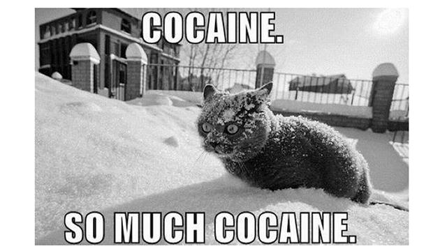 Cocaine, Hamilton, Mississauga, Ontario, Canada, Canada cocaine, Canada cocaine seized, cocaine seized, cocaine bust, Hamilton cocaine, Mississauga cocaine, cocaine bust, cocaine bust in Canada, cocaine bust in Ontario, Hamilton cocaine bust, Venezuelan cocaine, middle east cocaine, airport cocaine bust, Jamaica, Venezuela, middle east, Jamaican cocaine, opium, heroin, middle east opium, middle east heroin, drug bust, Canada drug bust, Pearson airport drug bust, Canada border agents, Canada border agents drug bust, Canadian Border Services Agency, Canadian Border Services Agency drug bust, Pearson drug bust, Pearson airport drug bust, Ontario drug bust, Ontario cocaine bust, cocaine at Pearson airport, cocaine at munro airport, Hamilton drug bust, Toronto drug bust, Toronto cocaine, cocaine from Jamaica, cocaine from Venezuela, hiding cocaine, cocaine in coffee packages, cocaine in coffee tins, munro airport drug bust, drug bust at pearson airport, drug bust at munro airport, cocaine gram, heroin gram, Canada police, Canadian police, Canadian crime, Canadian drugs, Canadian police find drugs, drug smuggling to Canada, Canada drug smuggling,