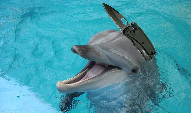 Ukranian navy is fitting dolphins with knives and pistols