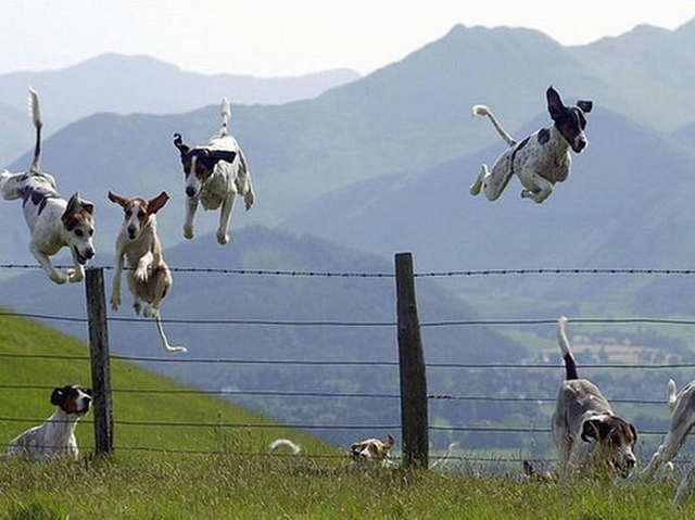 Flying-Dogs-763