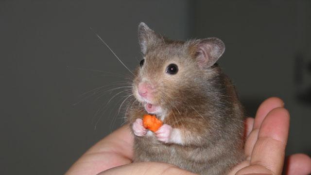 fried hamster community service freak cruelty