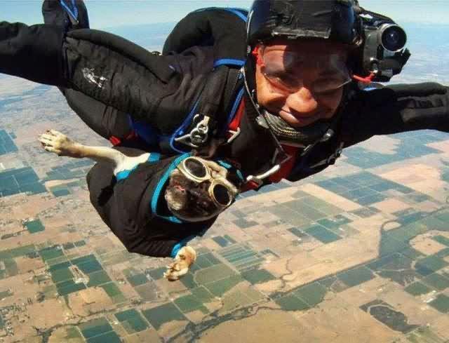 skydiving-dog
