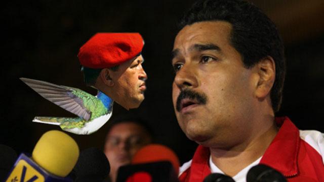 Hugo Chavez Bird Maduro