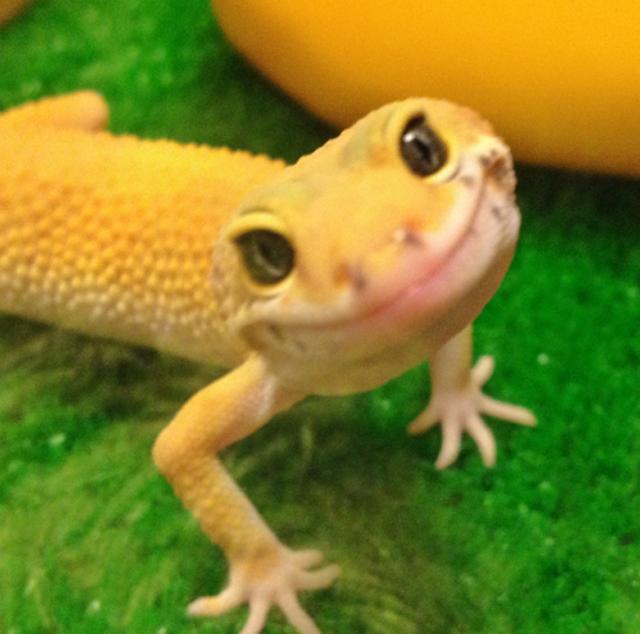 lizard smile