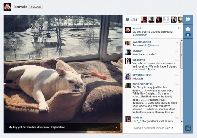 Sir Sleep, Val Chmerkovskiy, DWTS, Dancing With The Stars, Celebrity Pet