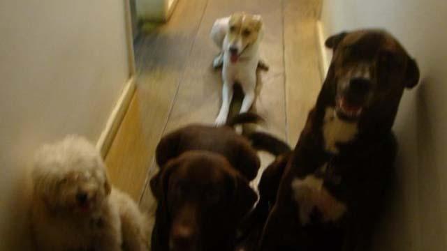 glenn greenwald dogs