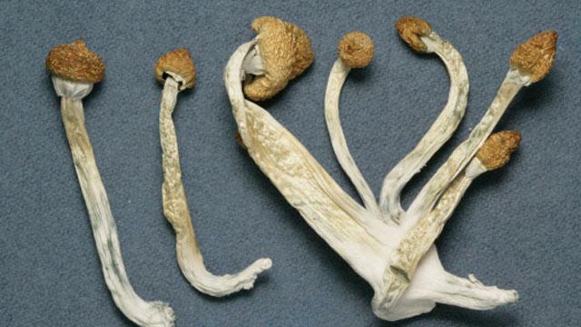 psilocybin mushrooms, man, penis, rips, off