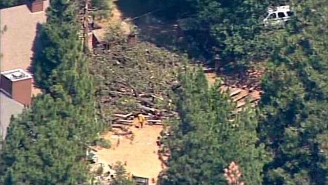 camp tawonga california tree fall