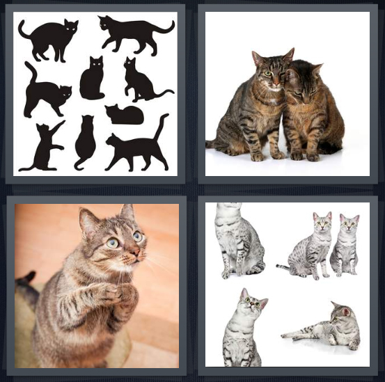 4 Pics 1 Word Answer 4 letters for silhouettes of animals, felines nuzzling, animal begging, group of white animals