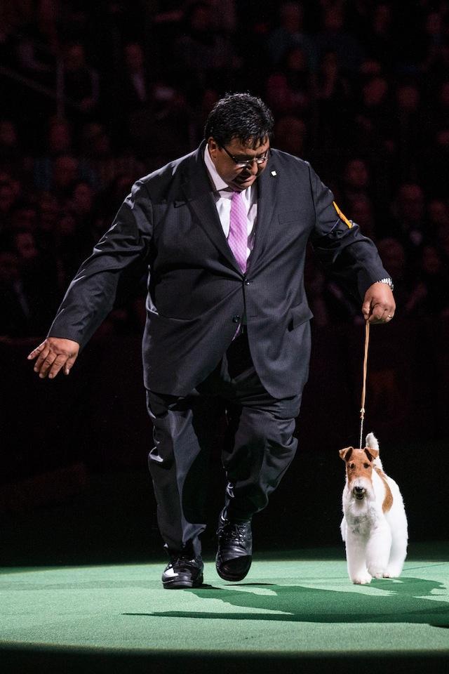 westminster dog winner