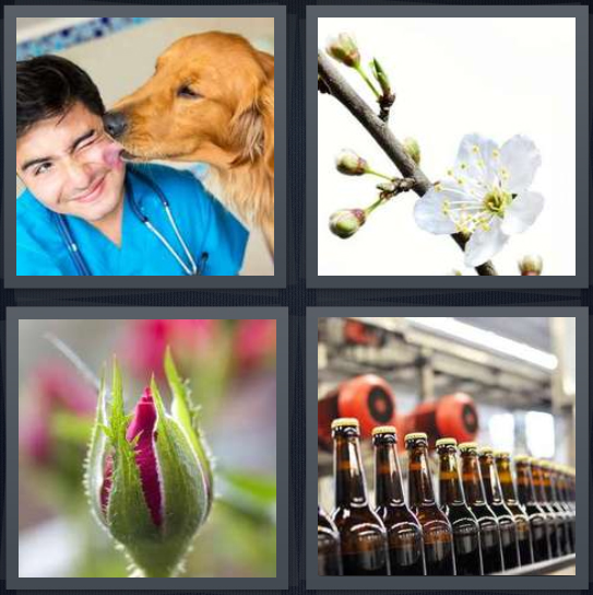 4 Pics 1 Word Answer 3 letters for man with dog licking face, flowers with stem, rose in green, beer bottles in factory