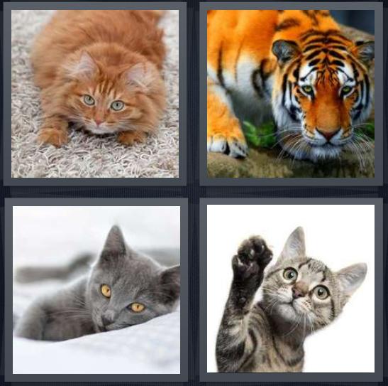 4 Pics 1 Word Answer 3 letters for orange feline on sand, lion with stripes, gray pet, kitten on white background