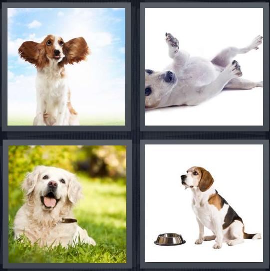 4 Pics 1 Word Answer 3 letters for puppy with floppy ears, puppy rolling on white background, pet in grass, pet asking for food
