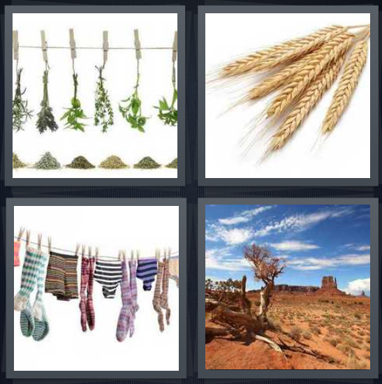 4 Pics 1 Word Answer 3 letters for herbs hanging in kitchen, wheat plucked from plant, laundry on line, Utah desert with red sand