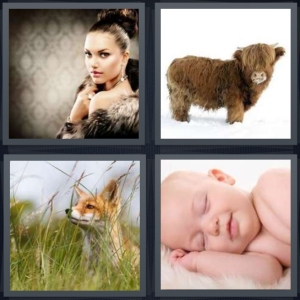 4 Pics 1 Word Answer 3 letters for woman wearing mink coat, yak with shaggy hair in snow, fox in green brush field, baby sleeping on fuzzy white blanket