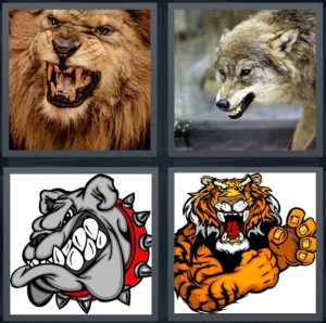4 Pics 1 Word Answer 5 letters for lion with teeth bared, wolf snarl, cartoon grey bulldog with teeth, cartoon tiger leaping