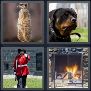 4 Pics 1 Word Answer 5 letters for prairie dog standing attention, dog watching house, English beefeater working, fireplace with glass grate