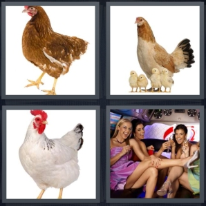 4 Pics 1 Word Answer 3 letters for bird that makes cluck noise, chicks with mother, chicken with red crest, bachelorette party limo