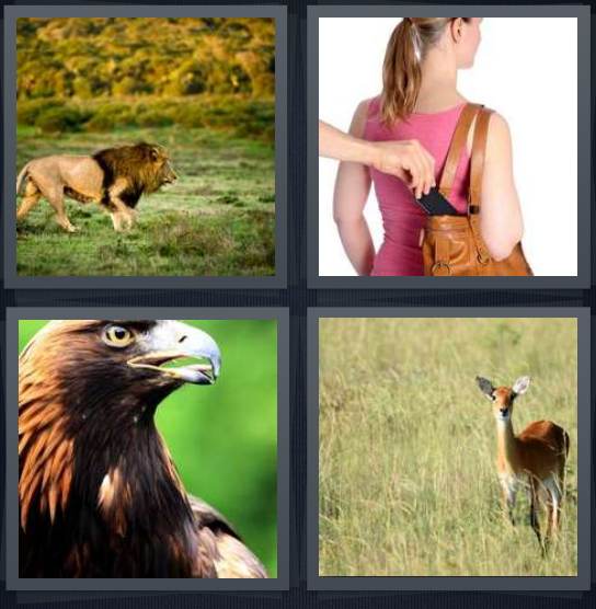 4 Pics 1 Word Answer 4 letters for lion in wilderness on hunt, pickpocket taking phone from purse, bald eagle in wild, deer in grass