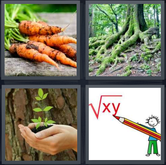 4 Pics 1 Word Answer 4 letters for carrots from ground with dirt, large tree in woods, sprout in hands, drawing of person doing math
