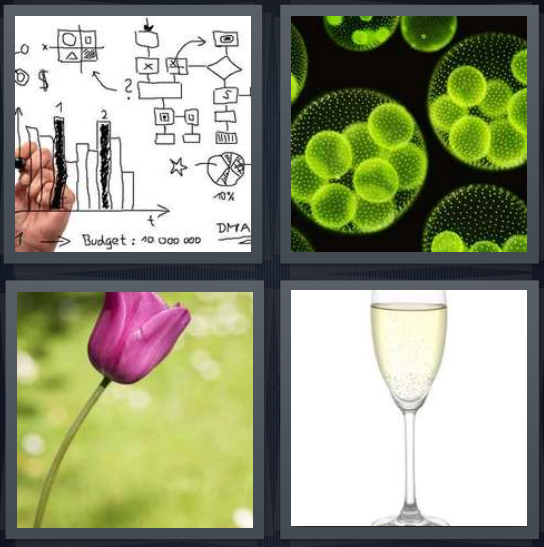 4 Pics 1 Word Answer 4 letters for black and white graph drawing, green bacteria through microscope, pink flower with green stalk, champagne flute