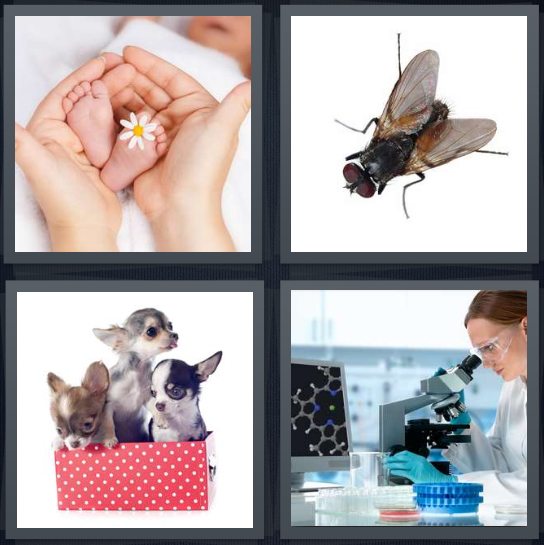 4 Pics 1 Word Answer 4 letters for baby feet in adult hands, fly on white background, puppies in red box, scientist looking through microscope in lab