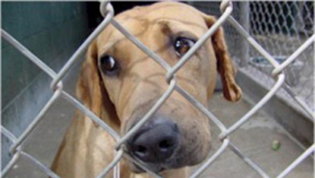 200 Dead Dogs Found in Backyard of South Carolina Man ...
