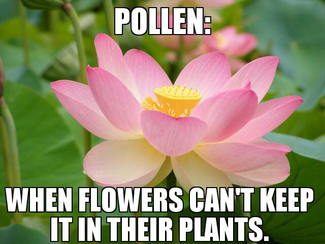 pollen vortex memes, allergy memes, allergy season