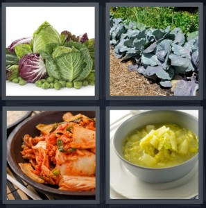 4 Pics 1 Word Answer 7 letters for lettuce and root vegetables on white background, plants in garden large leaves, kimchi with red sauce, leafy Polish soup yellow
