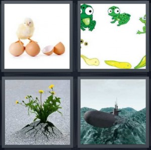 4 Pics 1 Word Answer 6 letters for chick hatching from egg, frog hatching from tadpole, flowers sprouting from pavement, submarine coming out of water