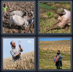 4 Pics 1 Word Answer 6 letters for Indian with ox for plowing field, person planting green crop in dark soil, man harvesting wheat, Andean woman in potato hills with child