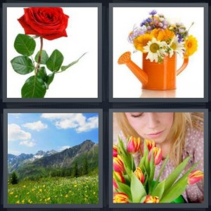 4 Pics 1 Word Answer 6 letters for red rose with green stem and thorns, bouquet in orange watering can, mountain field with yellow buds and blue sky, woman with pink and yellow tulips