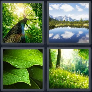 4 Pics 1 Word Answer 6 letters for tall tree with sunlight, lake with blue sky clouds mountains, dew on green leaf, forest with green grass and dandelions