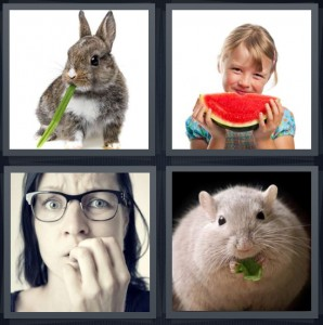 4 Pics 1 Word Answer 6 letters for bunny rabbit with green leaf stalk, girl eating watermelon, nervous woman biting nails, hamster with green leaf