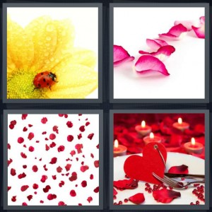 4 Pics 1 Word Answer 6 letters for ladybug on yellow flower, pink rose, parts from flowers scattered, romance heart with candles and roses